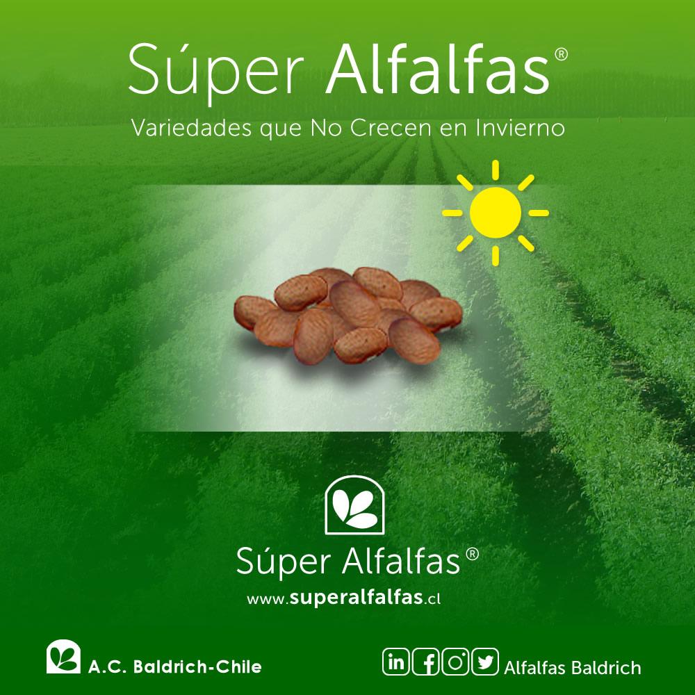 Alfalfas Baldrich - Redes Sociales, Community Manager